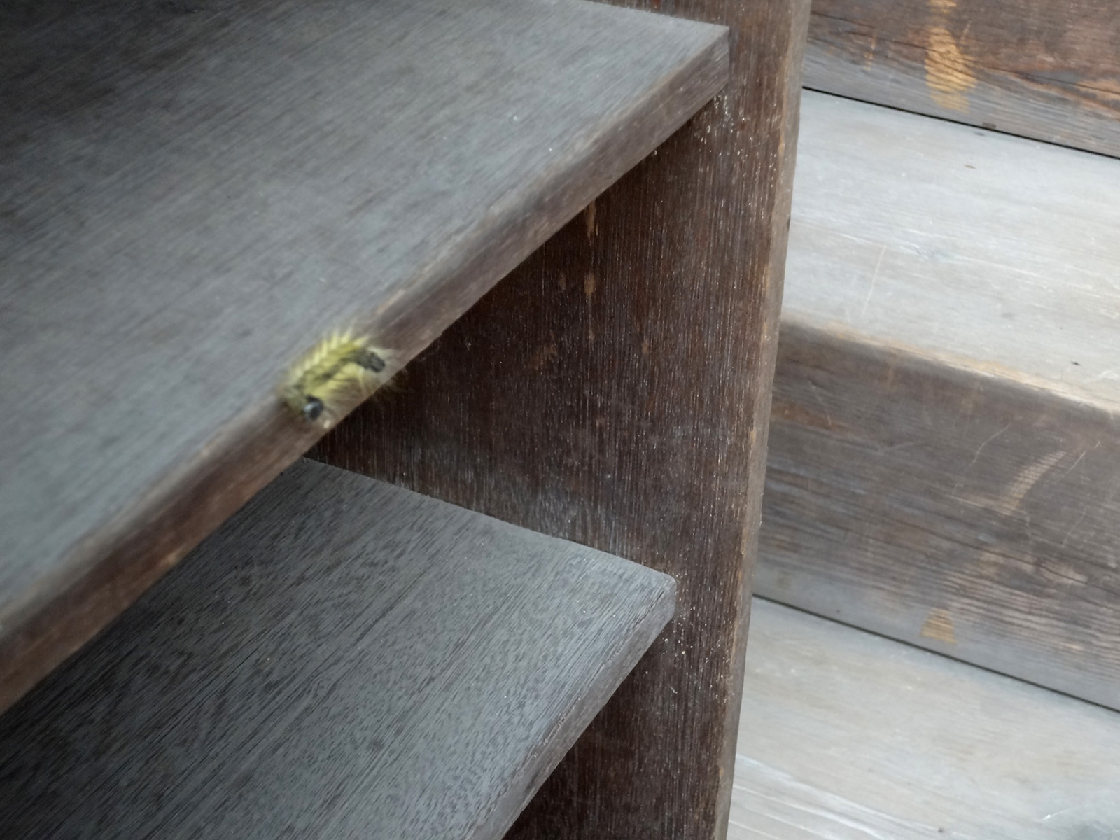 Blurry picture of caterpillar