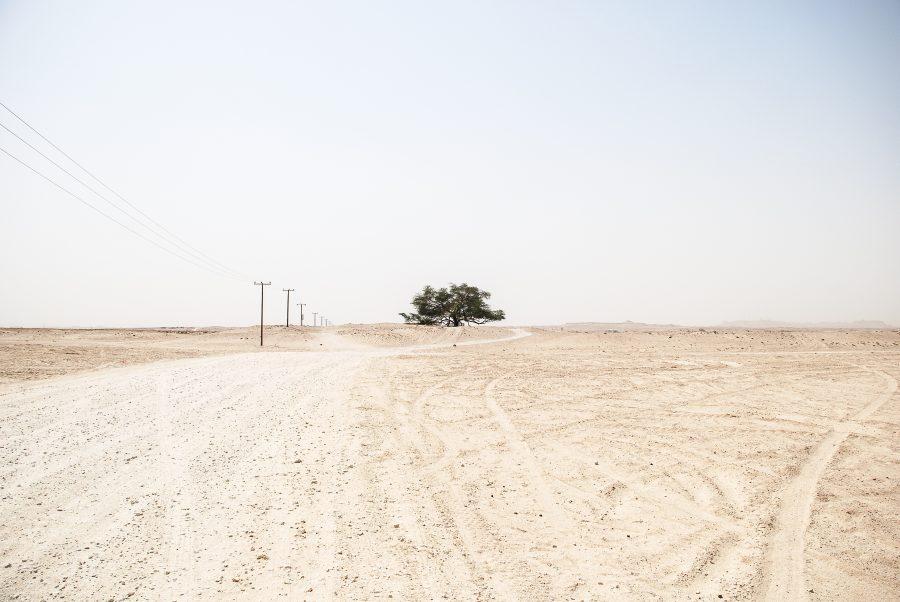 Desert and tree