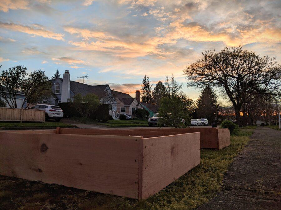 Garden beds at sunset